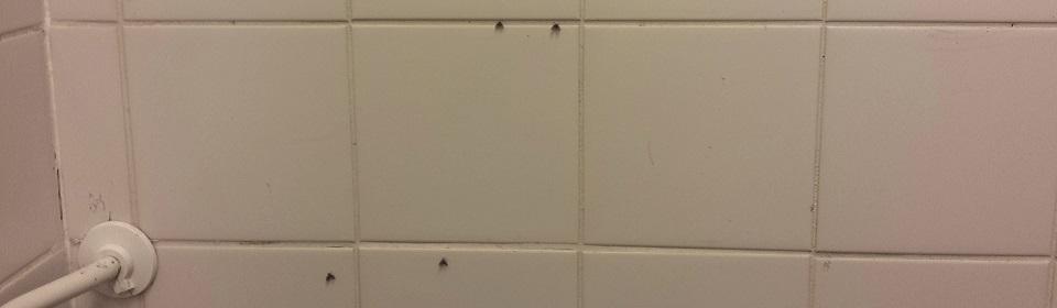 Rioolvliegjes op de tegels